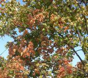 Осенняя пора-очей очарованье