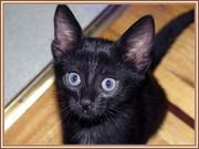 Мой кот Орион