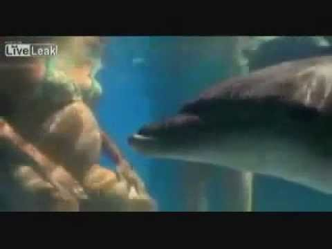 Dolphin Midwives and Underwater Birthing