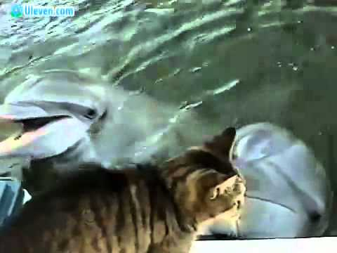 Friendship between cat and dolphin