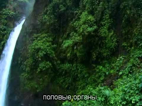 12.05.16 Золотой свет, очищение, Новая Земля