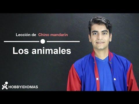 """""""Los animales"""" en CHINO MANDARÍN"""