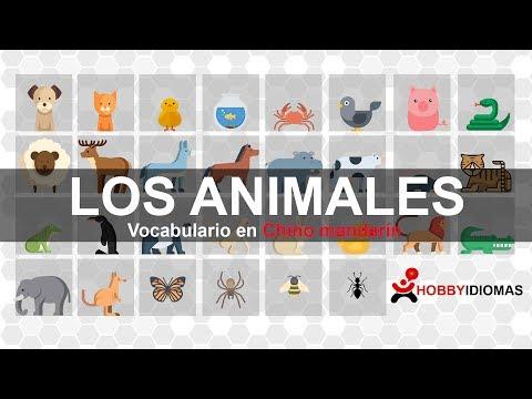 Vocabulario con imágenes: Animales en Chino mandarín