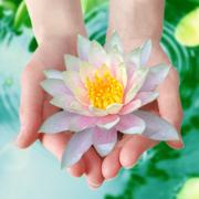 семинар «Чистота семи Дхату»
