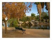 Encanto Park, Early Summer View