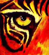 tiger sight