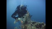 Liveaboard Nord wreck cruise