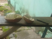 15 - Cupuaçu, fruta típica da região
