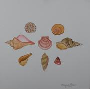Seashells I