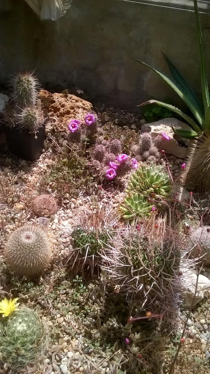 Keszthely kastélypark kaktuszok és pálmaház