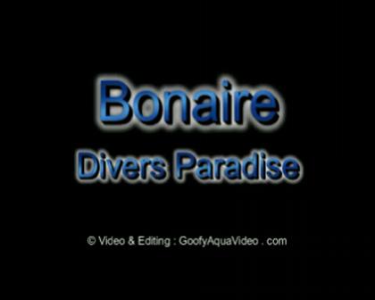 Film Turtle Bonaire duiken met reclame WMV bestand