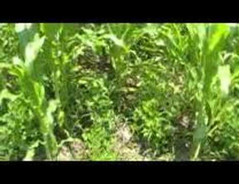 Survival Gardening Part 1  peak oil, food storage, TSHTF