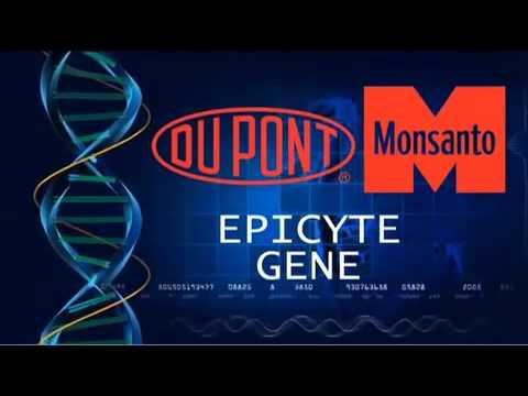 Epicyte: Contraceptive Corn