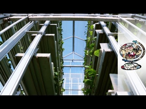 Singapore Is Pioneering Vertical-Farming Technology