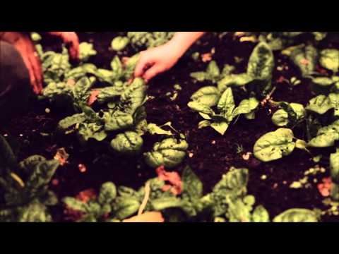 Vandana Shiva : Why We Must Respect & Support Our Organic Farmers