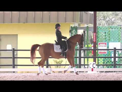 Robert Dover: Developing the Desire to Go Forward in Your Dressage Horse