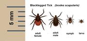 Keep an eye open for ticks.