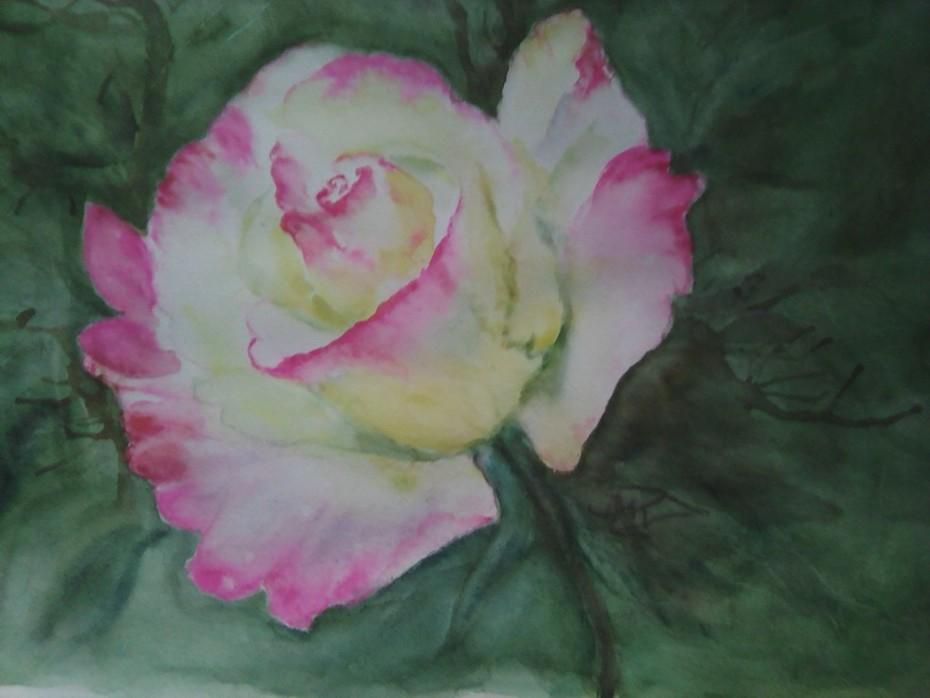 La 1ère Rose