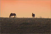Grazing After Sunset