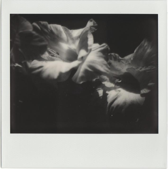 Natura morta - fiore