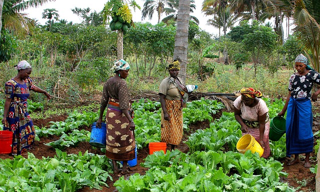 Does a multi-faceted market-based approach to food crops stimulate food security and agricultural development in Tanzania?