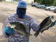 """Black Crappie Daily Double......Pair of 13"""" Fish"""