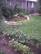 Tomato Cages and pond