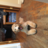 Hello, I am new to this blog and a new/first time goldendoodle parent! Benjiman is 5 months old and it has only been a month since I adopted him (although it feels like a lifetime). Benjiman had a e…