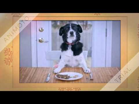 Best Pet Food