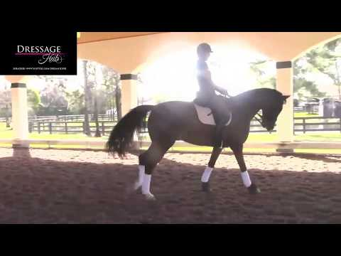 Hubertus Schmidt: Half Pass To Counter Canter