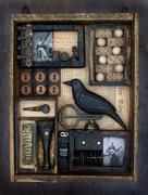 The Blue Black Bird