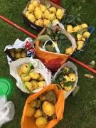 Fruit Harvesters meeting