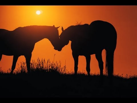 Inspirational Story - Two Horses in a Field