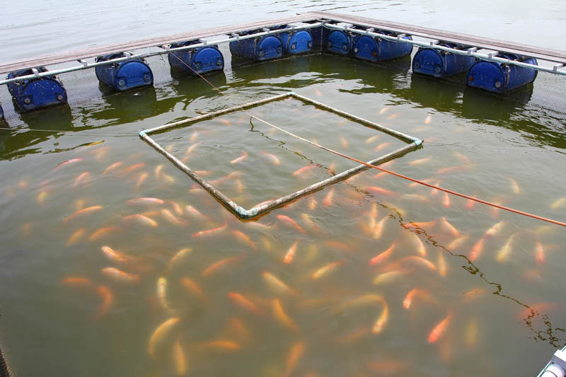 How to start fish farming on a small-scale