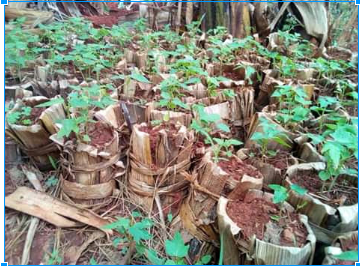 Youth use banana leaves to replace plastic bags