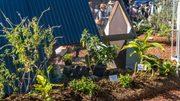 Queensland Garden Expo