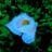 Valterra Blue