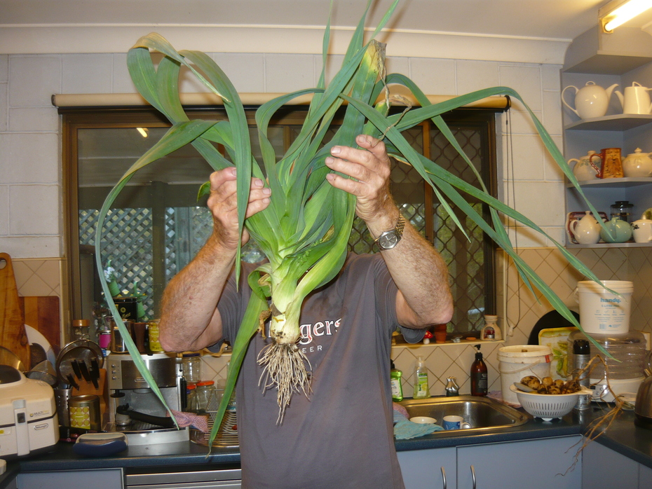 More on my lovely leeks
