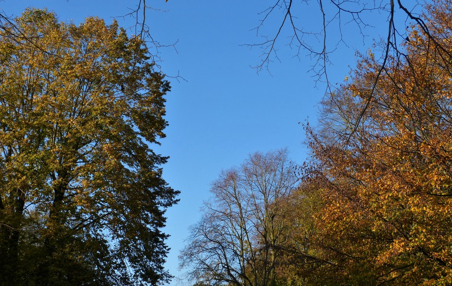 Autumn colour in bright sunlight, Nov 7th '19