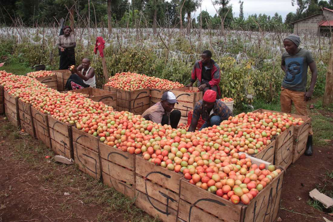 Why Kenyan farmers are struggling to import produce