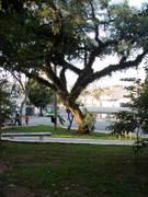 Vila Ipojuca - Praça