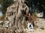 Guardate che albero meraviglioso!