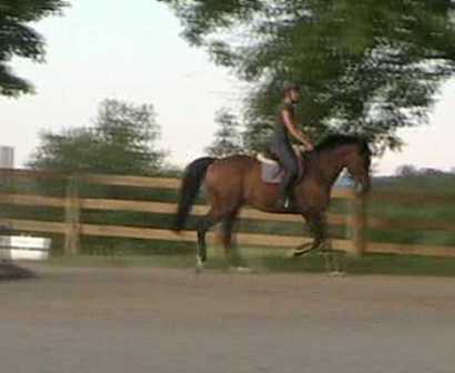 Helios jumping a small course...