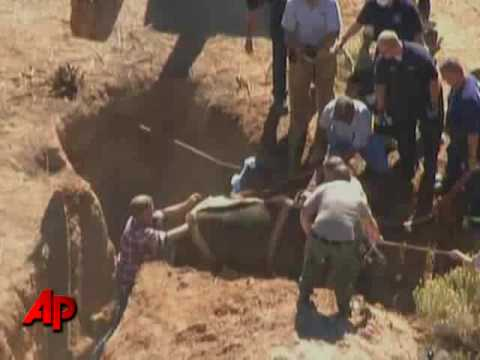 Arizona Horse Rescued from Hole Oct 15/09