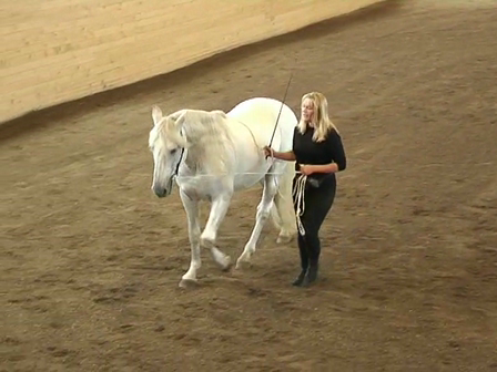 Long Reining 17 How to start the canter