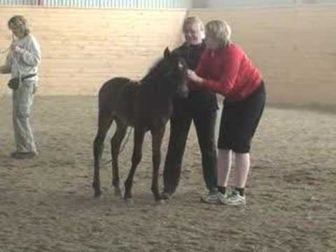 "A foals first ""training sesions""."
