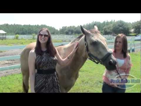 Horse Traded in For Used Van at Dealership