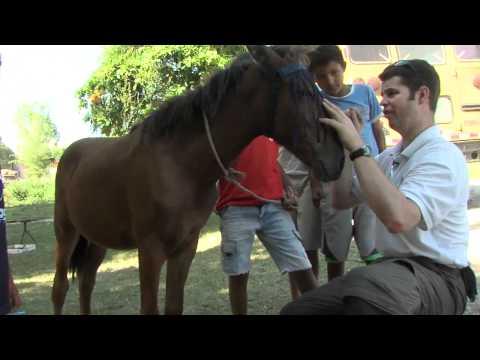 World Horse Welfare Christmas Message 2011