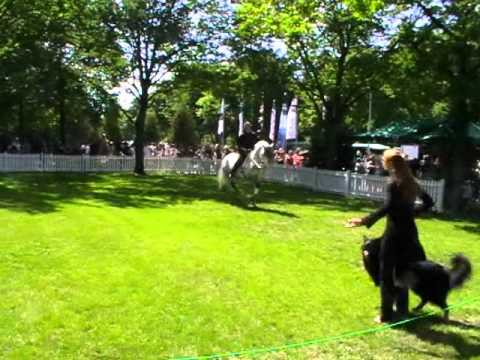 Dance With Horse and Hound