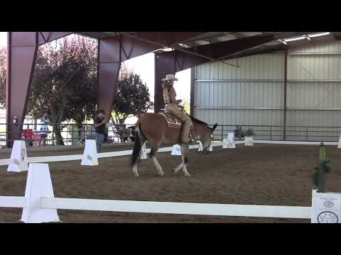 Promotional Video for Cowboy Dressage